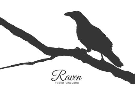 Vector illustration: Silhouette of Raven sitting on a dry branch.