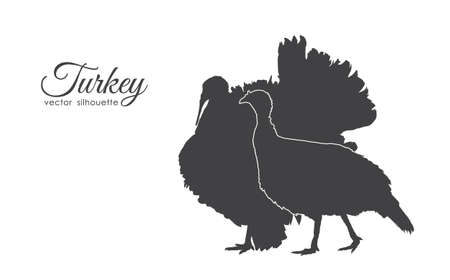 Vector illustration: Silhouette of couple turkeys isolated on white background.
