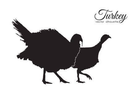 Vector illustration: Silhouette of couple turkeys on white background.