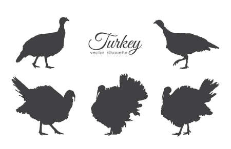 Vector illustration: Set of turkeys silhouette isolated on white background. Illustration