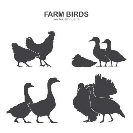 Vector illustration: Set of farm birds silhouette.