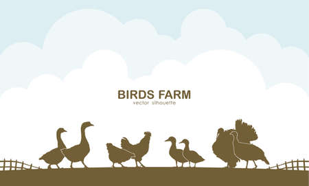 Vector illustration: Design template of background with farm birds and fence. Stok Fotoğraf - 94722598