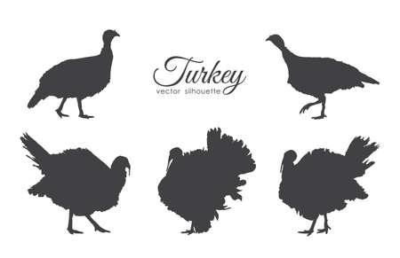 Vector illustration: Set of turkeys silhouette isolated on white background. Illustration