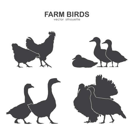 Vector illustration: Set of farm birds silhouette Stock fotó