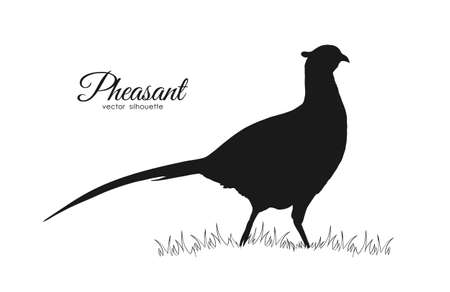 Vector illustration: Black silhouette of pheasant on white background Standard-Bild - 102125897