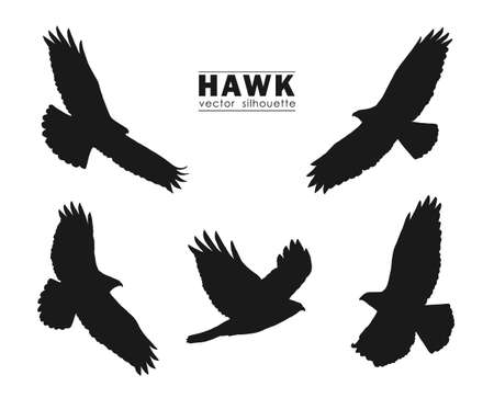 Vector illustration: Set of Silhouettes of flying Hawk isolated on white background. Black eagles. Reklamní fotografie - 102126547