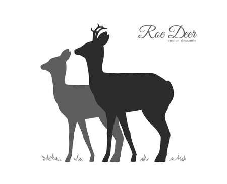 Ilustración vectorial: silueta de dos corzos aislados sobre fondo blanco.