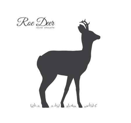 Vector illustration: Black silhouette of Roe Deer isolated on white background. Illustration