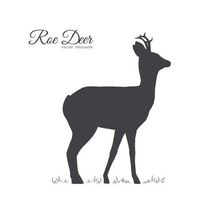 Vector illustration: Black silhouette of Roe Deer isolated on white background.