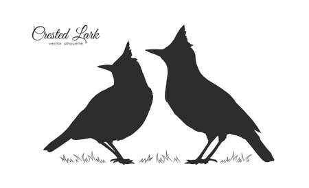 Vector illustration: Two Silhouette of Crested Lark. Little birds on white background