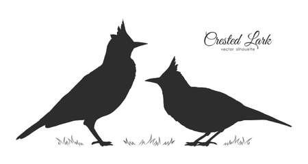 Vector illustration: Two Silhouette of Crested Lark. Little birds 向量圖像