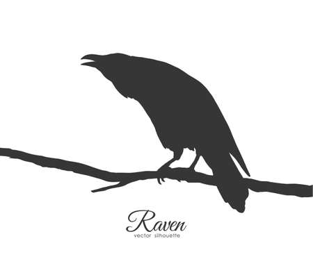 Vector illustration: Silhouette of Raven sitting on branch on white background. Illustration