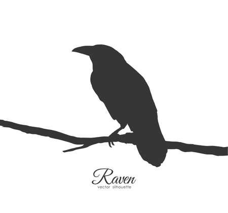 Vector illustration: Raven sitting on branch on white background. Silhouette of bird. Illustration