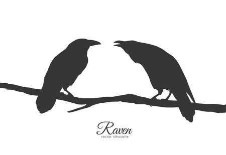 Vector illustration: Two Ravens sitting on branch on white background. Silhouette of birds.