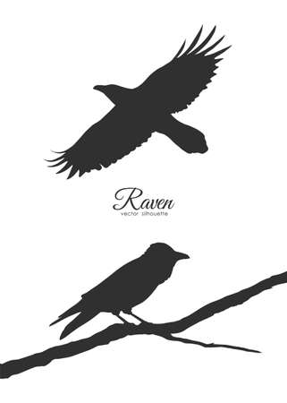 Vector illustration: Set of two Silhouette of Ravens sitting on branch and flying.