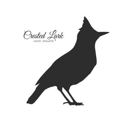 Vector illustration: Silhouette of Crested Lark. Bird on white background