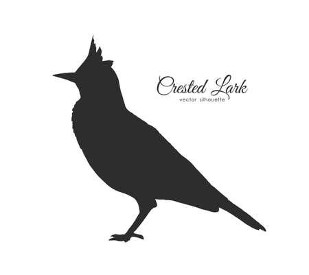 Silhouette of Crested Lark. Little bird on white background