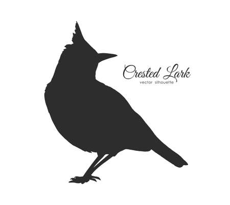 Silhouette of Crested Lark. Little bird isolated on white background