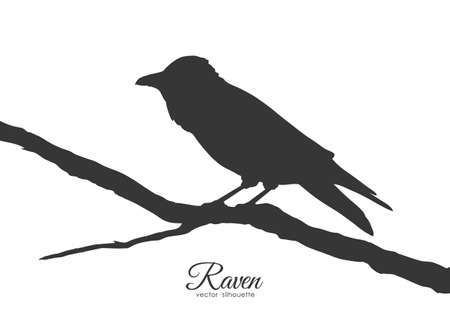 Vector illustration: Silhouette of Raven sitting on a dry branch on white background.