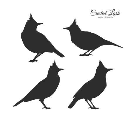 Set of four Silhouette of Crested Lark. Little birds on white background