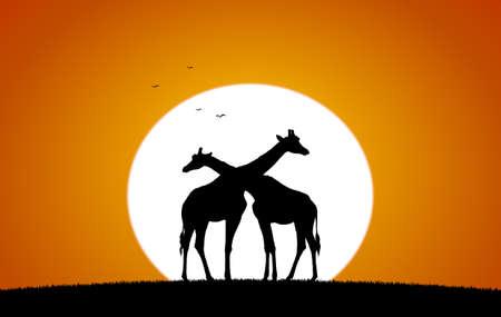 Vector illustration: Two Giraffe against the setting sun. Silhouette 向量圖像