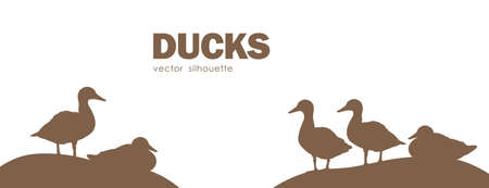 Vector illustration: Banner design with Silhouette of isolated ducks on white background.