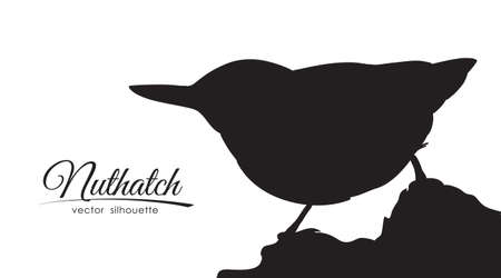 Vector illustration: Isolated silhouette of Nuthatch on white background.