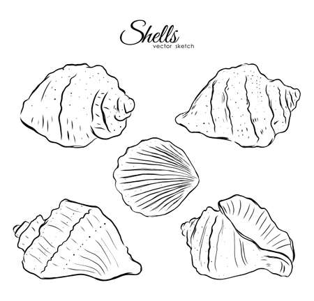 Vector illustration: Set of five hand drawn shells on white background. Sketch line design