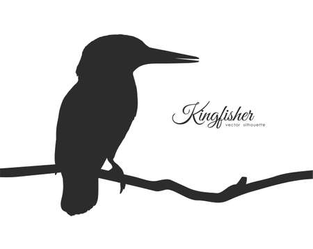 Vector Silhouette of Kingfisher sitting on a dry branch. Vetores