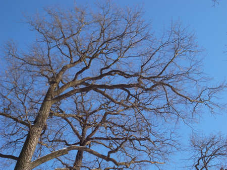 Trees in anticipation of spring. tree branches against the sky. Winter park.