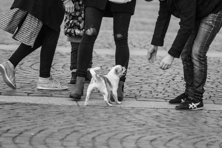 let s: Where are you going? Let `s play! Playful puppy is the focus of the people around them. Stock Photo