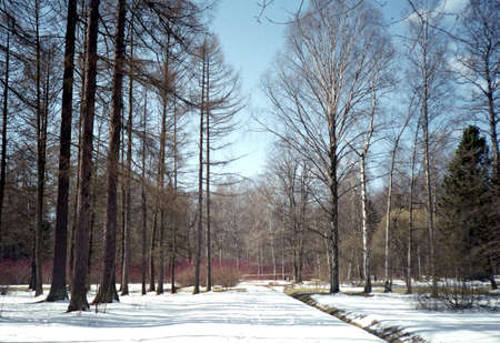 gradually: Early spring in the park. A clear day, nature gradually comes to life.