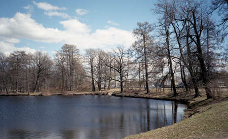 fussy: Spring landscape. Fussy trees over the pond in the park. Reflection.