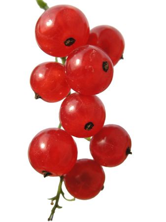 arousing: Branch with a red berry