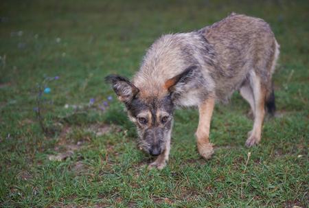 Cowardly Stray Dog Looking Into The Camera Stock fotó
