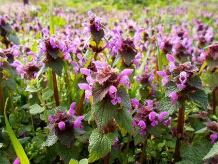 effloresce: Spring flowers