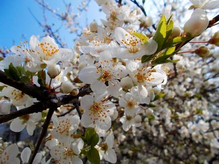 blooms: Flower Blooms