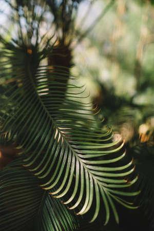 Close up indoor photo of palm leaves in Botanical garden Reklamní fotografie