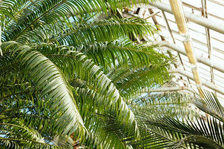 Photo of various ferns, palms and tropical plants in greenhouse