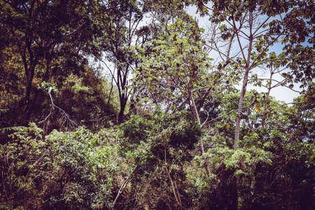 costa rica forest green trees Foto de archivo - 102200251