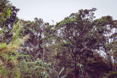 costa rica forest green trees Foto de archivo - 102217112