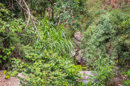 nature river green costa rica Foto de archivo - 102217130