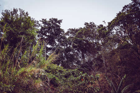 costa rica forest green trees Foto de archivo - 102217131