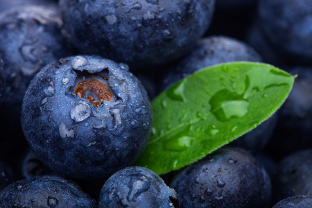 Fresh raw organic blueberries with leaf with morning dew in forest. Macro