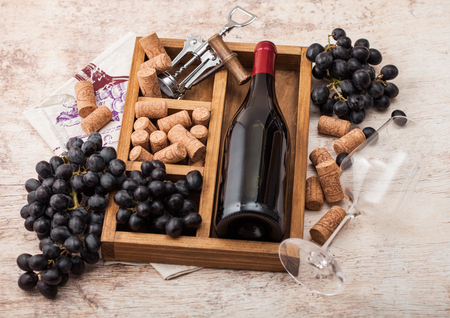 Bottle of red wine and empty glass with dark grapes with corks and opener inside vintage wooden box on light wooden background with linen towel