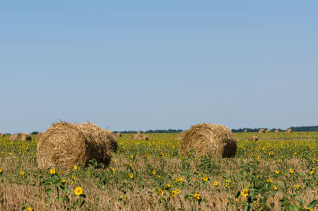 Haystack on the meadow in sunny day photo