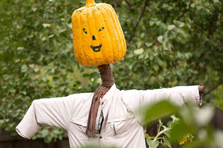 A handmade male scarecrow in field sunflower photo