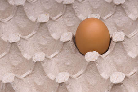 One brown egg in packing for eggs Stock Photo - 6484989