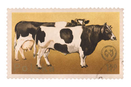 canceled: POLAND - CIRCA 1975: A postage stamp printed in the Poland shows image of a cow, circa 1975
