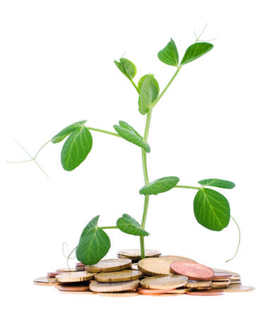 Coins and plant, isolated on white background photo